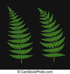 verde, hoja del fern, conjunto