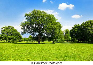 verde, inglês, parque