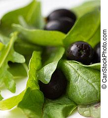 verde insalata