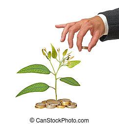 verde, investimento, affari
