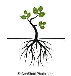 verde, jovem, árvore, com, leafs., vetorial, illustration.
