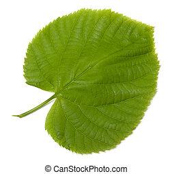 verde, linden-tree, folha