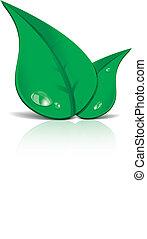 verde, mette foglie