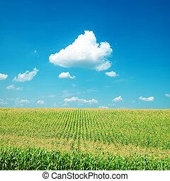 verde, milho, campo, sob, nuvens