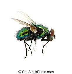 verde, mosca