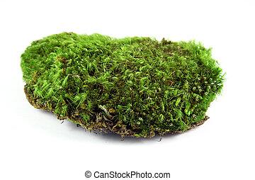 verde, muschio