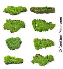 verde, muschio, isolato, bianco, bakground