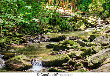 verde, musgo, corriente, rocas
