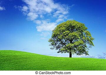 verde, natureza, springtime