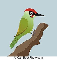 verde, pájaro carpintero