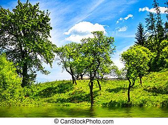 verde, paisaje, naturaleza