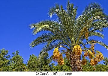 verde, palma, con, un, fecha, fruits, en, un, azul, sky., antalya, pavo