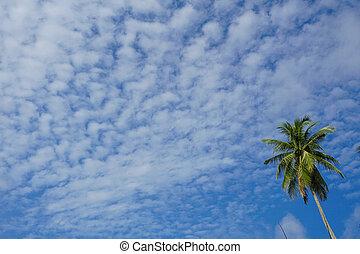 verde, palma, su, cielo blu, fondo
