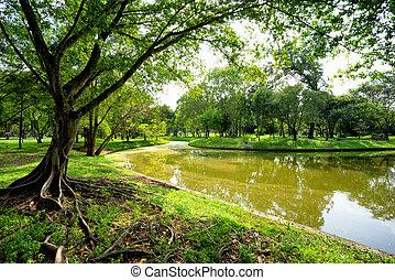 verde, parque, árvores, vista