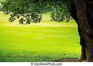 verde, parque cidade, com, árvores.
