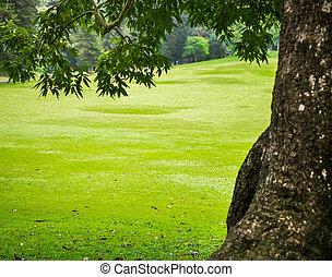 verde, parque de la ciudad, con, árboles.