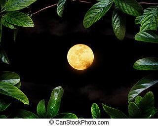 verde, pianta animale strisciante, sopra, luna piena, a, night.
