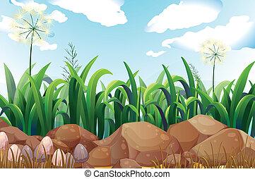 verde, piante, e, pietre