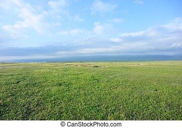 verde, pianura, spiaggia