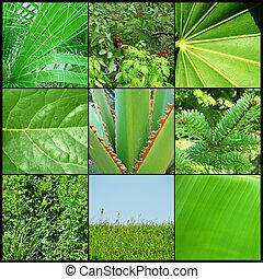 verde, Plano de fondo, naturaleza