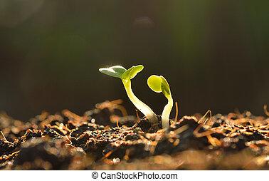 verde, planta de semillero, crecer, afuera, de, tierra, en, sol