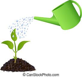 verde, planta jovem, com, lata molhando