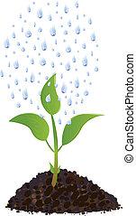 verde, planta joven, con, gotas de la lluvia