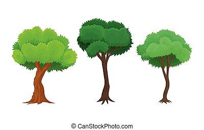 verde, planta perenne, tronco, hojas, ilustración, árbol, conjunto, vector, ramas, planta