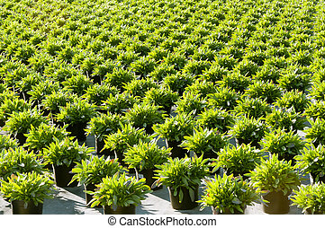 verde, plantas