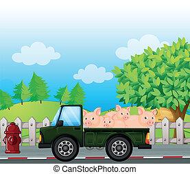 verde, porcos, caminhão, costas