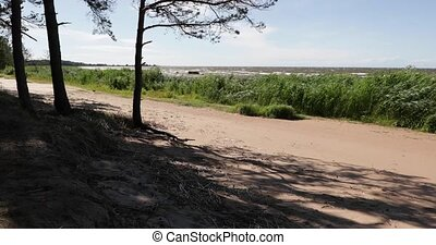 verde, praia arenosa, vegetação, árvores