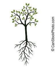verde, primavera, árvore, com, leaves., vetorial, illustration.