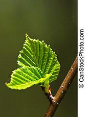 verde, primavera, foglie