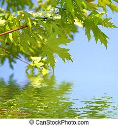 verde, primavera, hojas, contra, cielo azul