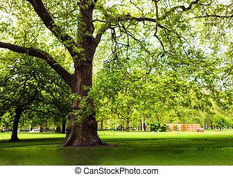 verde, primavera, parque