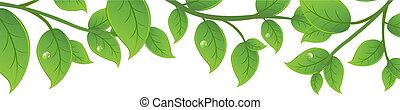 verde, ramas