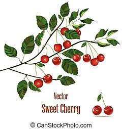 verde, ramo, com, vermelho, cherries.