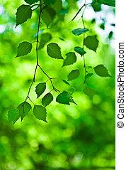 verde, ramo, de, fresco, folhas
