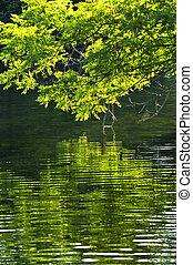 verde, reflexões, em, água
