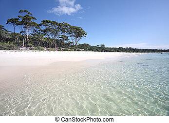verde, remendo, praia, austrália