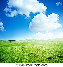verde, rimbombante, campi