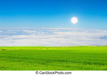 verde, risaia, e, cielo