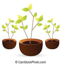 verde sai, árvore, branca, crescer