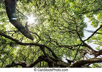 verde sai, com, um, sol brilhante, brilhar, através
