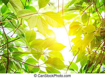 verde sai, em, luz brilhante