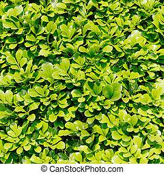 verde sai, fundo