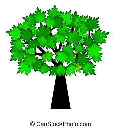 verde sai, ligado, árvore, em, verão