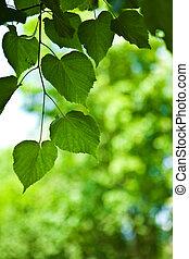 verde sai, ligado, um, experiência blurry, abstratos