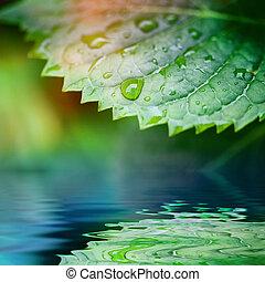verde sai, refletido dentro, água, closeup