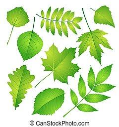 verde sai, set., vetorial, ilustração, eps, 10.